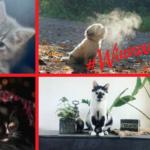 Winnaars fotowedstrijd jouw favoriete huisdier